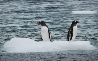 Вправа пальчикової гімнастики «Пінгвіни»