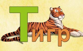 Вправи логопедичної гімнастики на звук Т