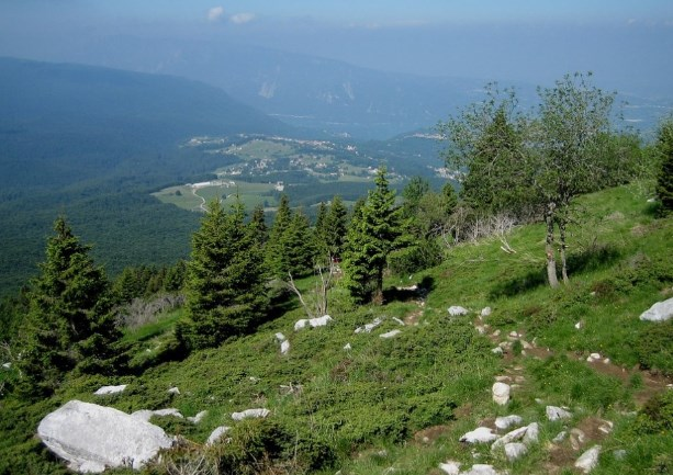 Хвойні ліси у горах