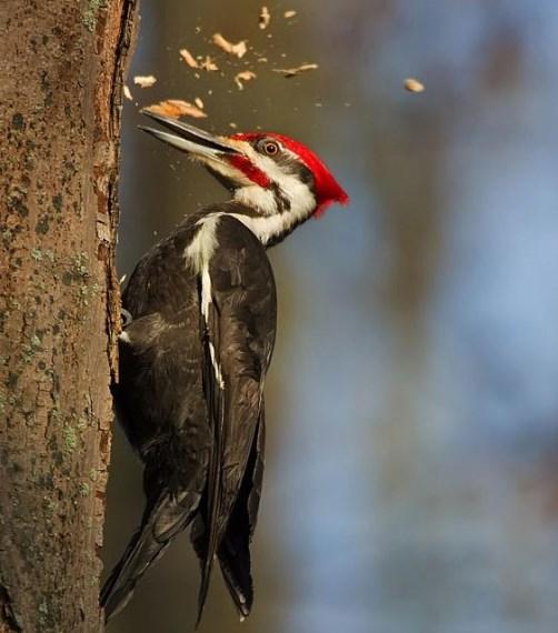 Лісовий птах